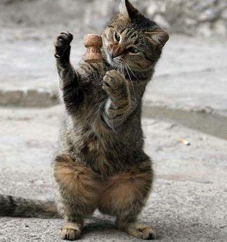 telekenetic kitten